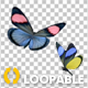 Butterfly Pair - Rainbow Batesia - VideoHive Item for Sale