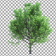 Tree Transparancy - VideoHive Item for Sale