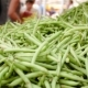 Harvest Green Beans at the Farmers Market