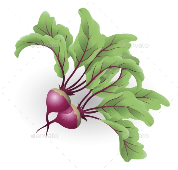 Beetroot Illustration - Food Objects