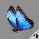 Blue Butterfly - VideoHive Item for Sale