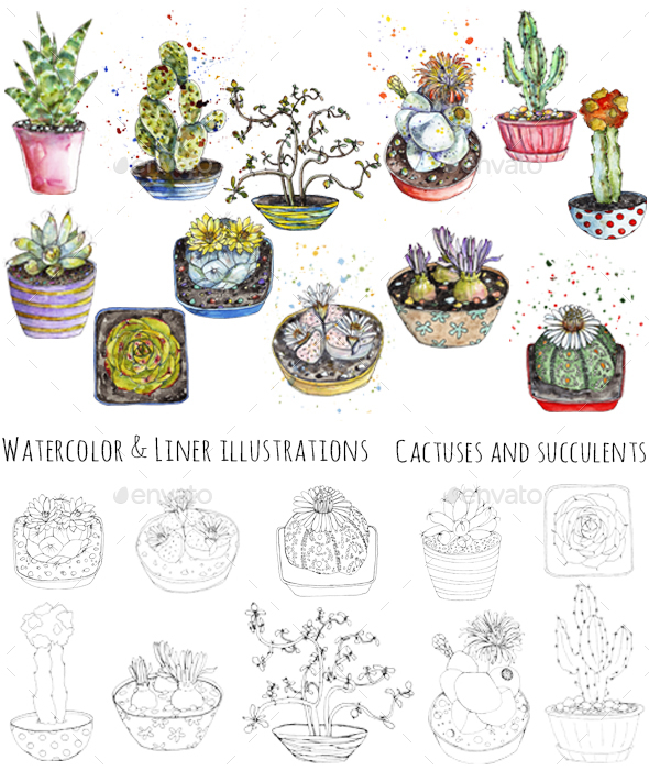 Cactuses Watercolor and Pen Illustrations - Miscellaneous Illustrations