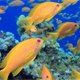 Underwater Colorful Happy Tropical Fishes - VideoHive Item for Sale