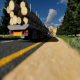 Sunny Forest Traffic - VideoHive Item for Sale