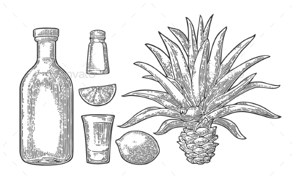 Tequila Items - Food Objects