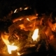 Burning Fire with Wood in the Night with a Bright Flame - VideoHive Item for Sale
