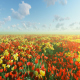 Flower field - VideoHive Item for Sale
