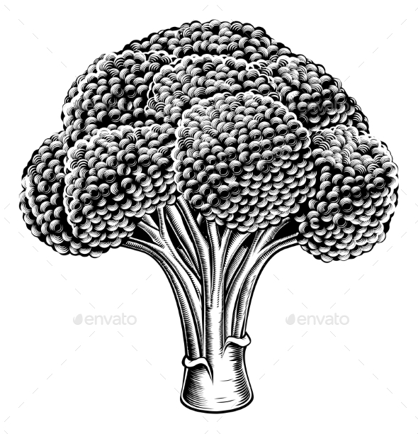 Vintage Retro Woodcut Broccoli - Food Objects