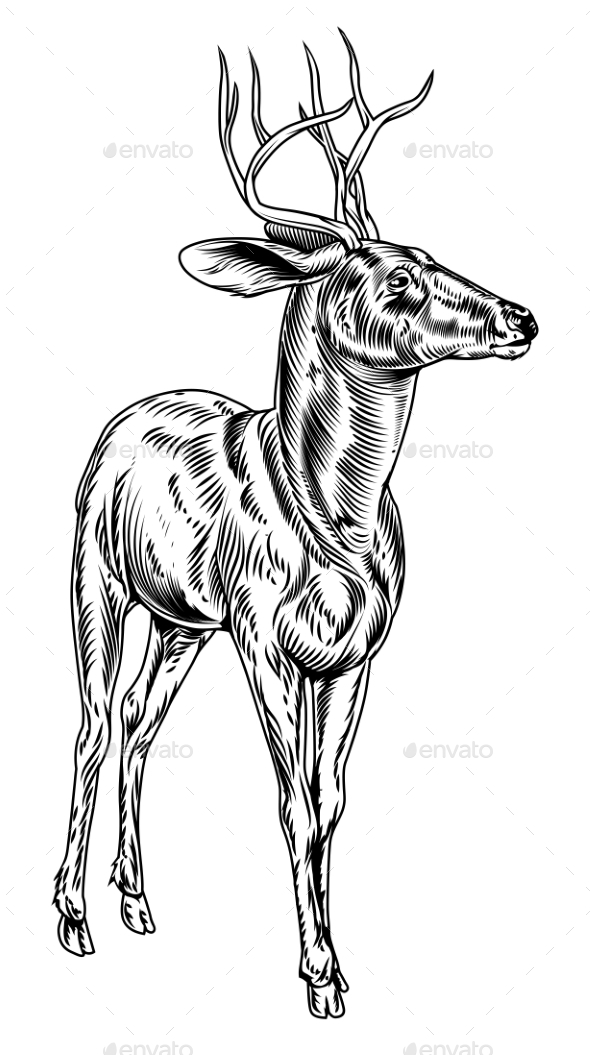 Vintage Style Woodcut Stag Deer - Animals Characters