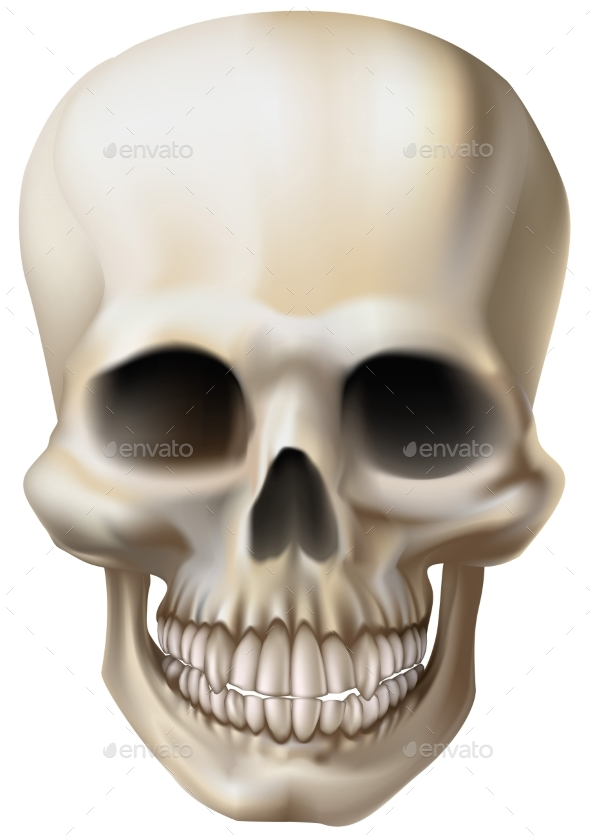 Illustration of a Human Skull - People Characters