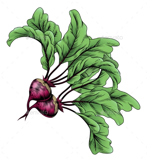 Beets Vintage Woodcut Illustration - Food Objects