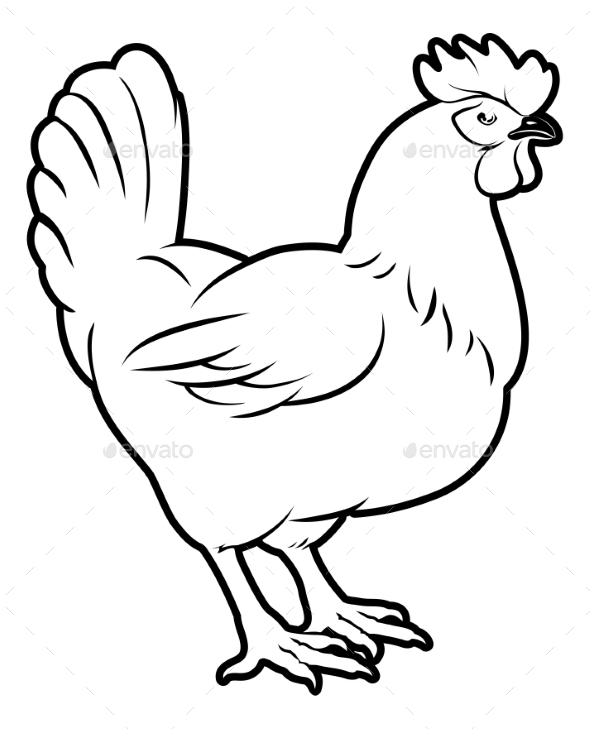 Chicken Illustration - Animals Characters