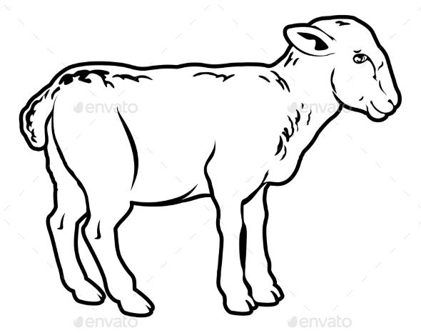 Lamb - Food Objects