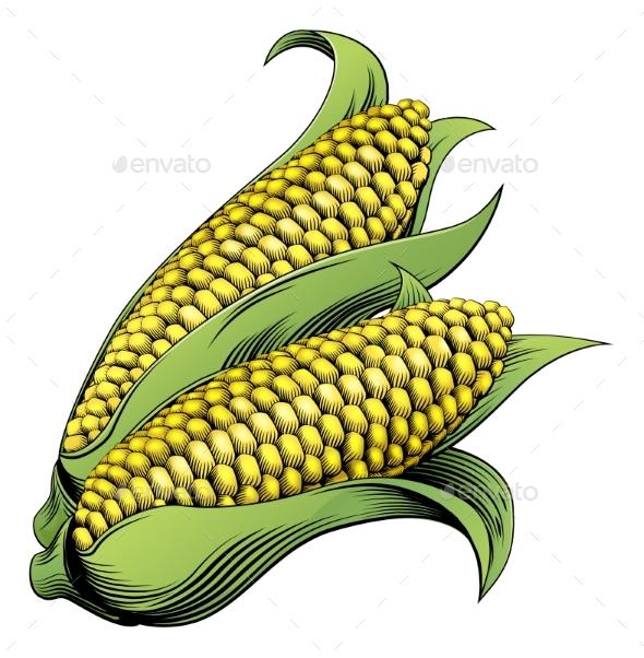 Corn Vintage Woodcut Illustration - Food Objects