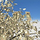 Japanese Yen Money Tree - VideoHive Item for Sale