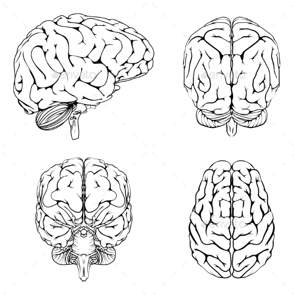 Brain From Top Side Front and Back - Health/Medicine Conceptual