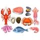 Various Seafood Set. Illustration of Fish - GraphicRiver Item for Sale