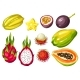 Exotic Tropical Fruits Set. Illustration of Asian - GraphicRiver Item for Sale