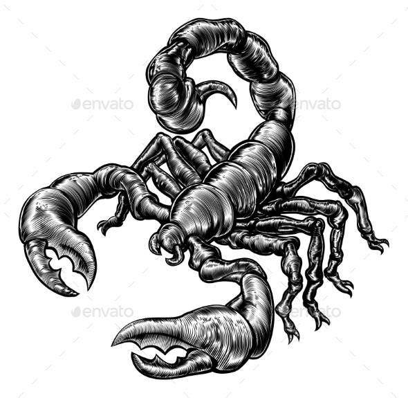 Vintage Woodblock Style Scorpion - Animals Characters