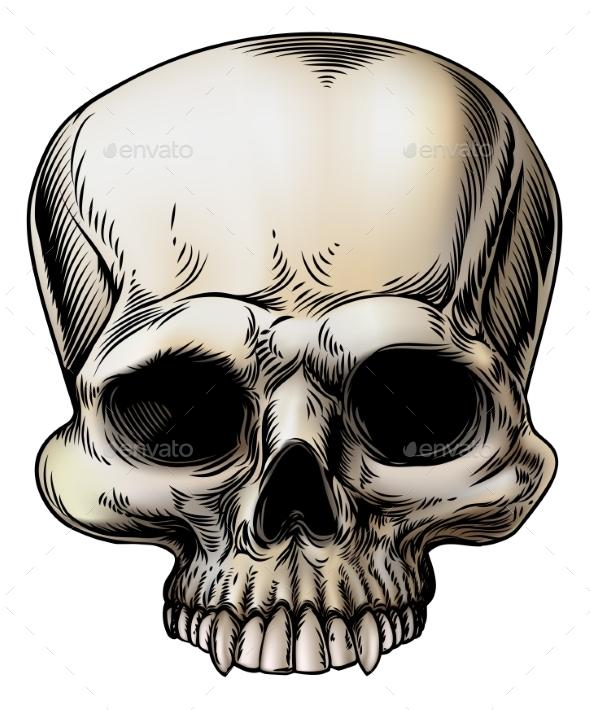 Human Skull Illustration - Miscellaneous Vectors