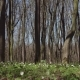 Sunny Day Spring Forest