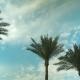 Palm Tree Sky Cloud