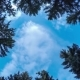 Pine Forest with Floating Clouds - VideoHive Item for Sale