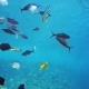 A Large Group of Fish Swim in the Red Sea - VideoHive Item for Sale