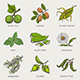 Set of Herbs and Plants - GraphicRiver Item for Sale