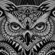 Owl Zen - GraphicRiver Item for Sale