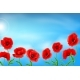 Greeting Card Poppies Flowers. - GraphicRiver Item for Sale