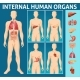 Cartoon Human Body Internal Parts Concept - GraphicRiver Item for Sale