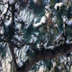 Passing Snow Covered Pine Branches - VideoHive Item for Sale