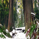 Forest Ferns And Trees In Thick Snow