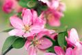 Spring - PhotoDune Item for Sale