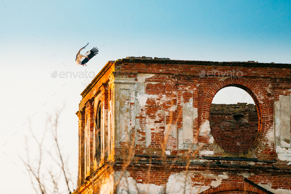 European White Stork Lands On Wall Of Old Ruined Orthodox Church - Stock Photo - Images