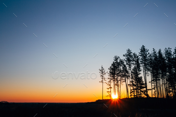 Sunset, Sunrise In Pine Forest. Bright Colorful Dramatic Sky And