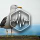 Seagull Calls