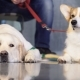 Adorable Purebred Pet on Dog Exhibition