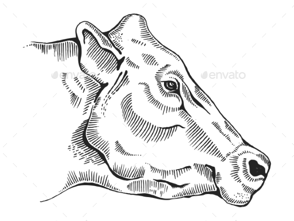Cow Head Engraving Style Vector Illustration - Miscellaneous Vectors