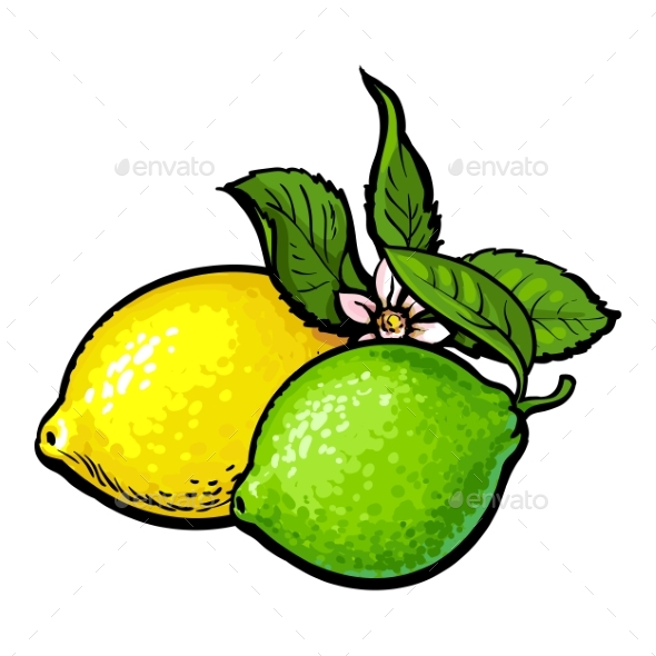 Whole Shiny Lime and Lemon with Fresh Green Leaf - Food Objects