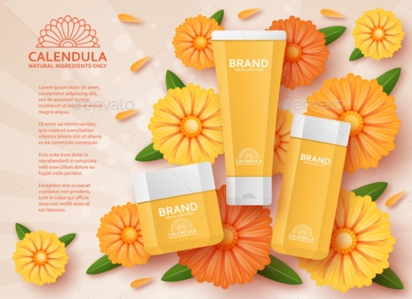 Cosmetic Template with Calendula. Vector - Miscellaneous Vectors