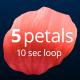 5 Rose Petals Loop - VideoHive Item for Sale