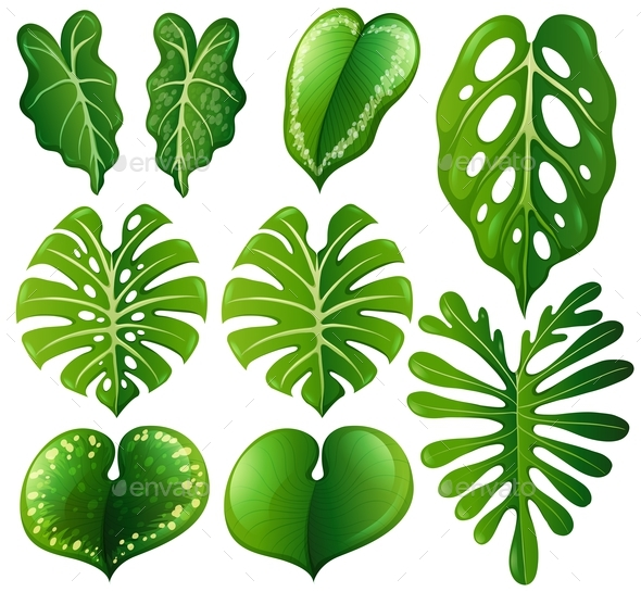 Set of Different Kinds of Leaves - Flowers & Plants Nature