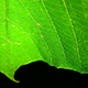 A Green Leaf Waving Slowly - VideoHive Item for Sale