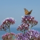Butterfly on Flower Against Beautiful Sea View - VideoHive Item for Sale