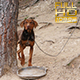 Dog Hunting - VideoHive Item for Sale