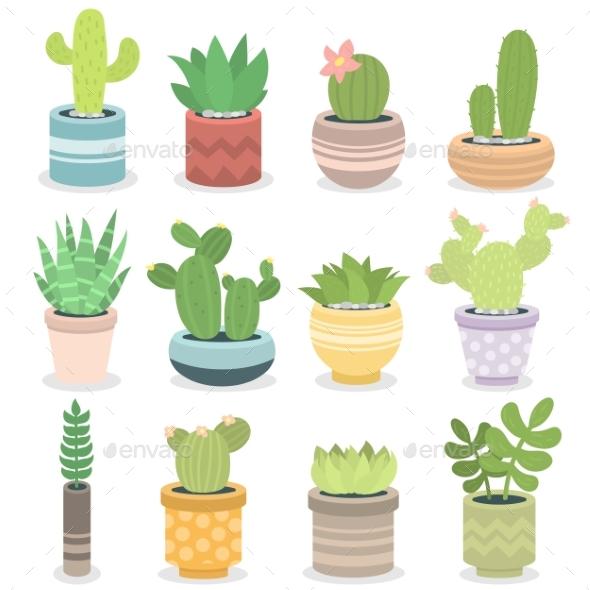 Cactus Nature Green Succulent Tropical Plant - Nature Conceptual
