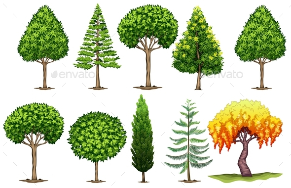 Set of Different Types of Trees - Flowers & Plants Nature