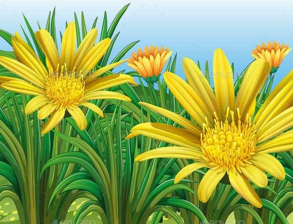 Yellow Flowers in the Field - Flowers & Plants Nature